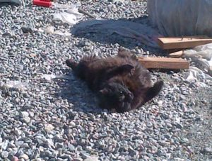At the end of the day, Blackberry had the right idea - it was time to soak in the sun and just enjoy!