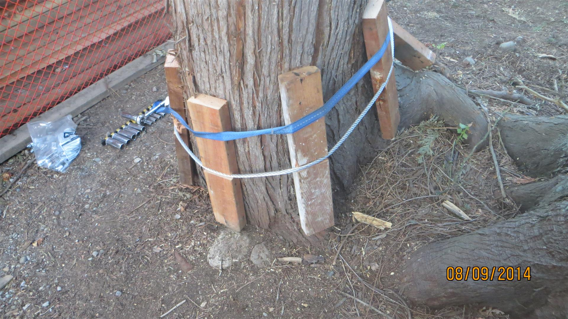 In several cases I wrapped a cable around the tree and protected the tree with wood blocks to distribute the load and prevent the cable from cutting into the bark.  I got this idea from the internet where people were installing zip-lines.