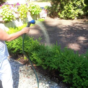 Gail - watering her front garden with my captured ground water.