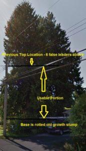 Tree to Remove